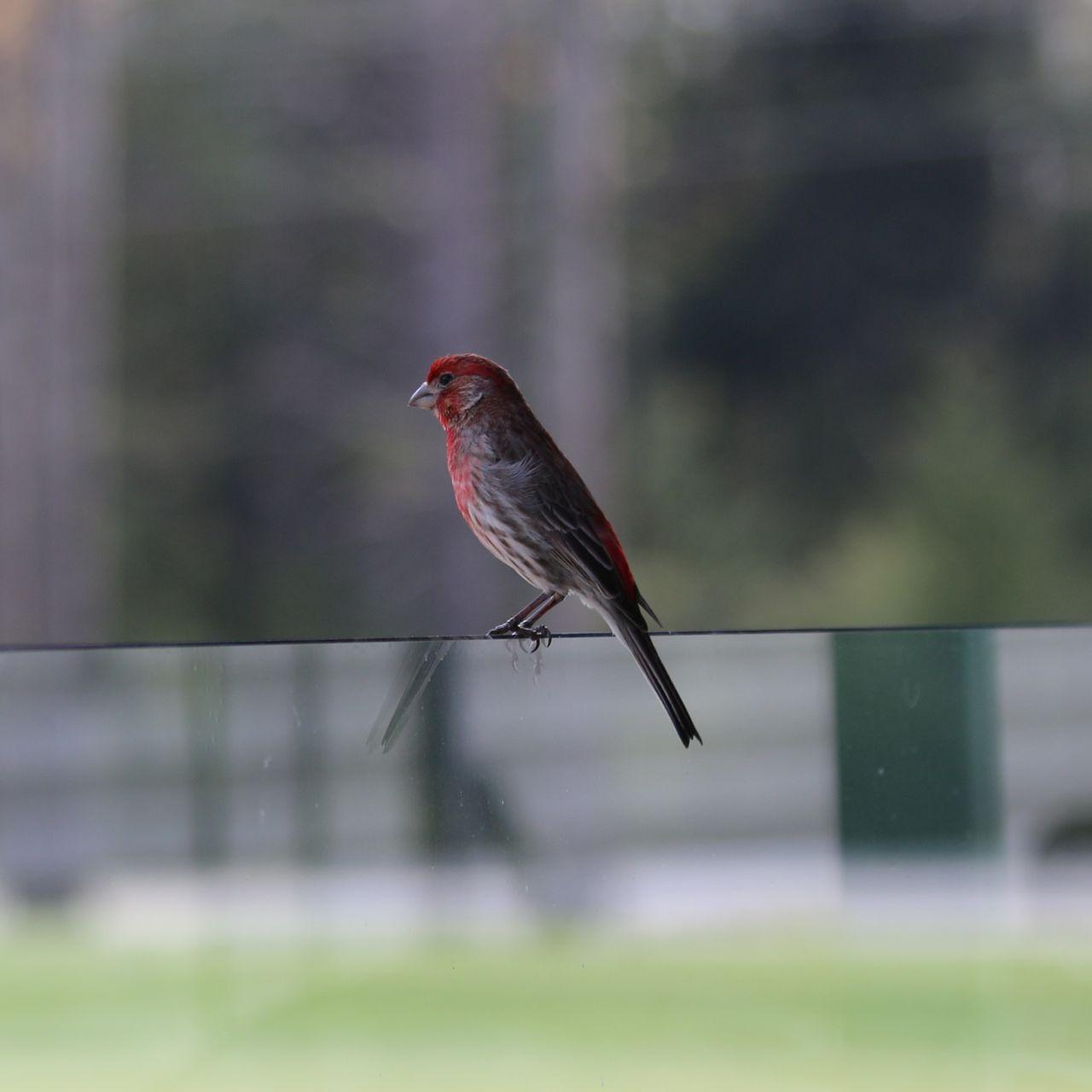 New Hampshire Bird