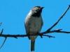 bird-in-the-driveway
