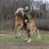 Jousting in New Hampshire