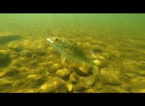Winni Fish